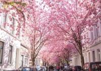 看樱花还去什么日本?这个地方才是真正的人少景美!